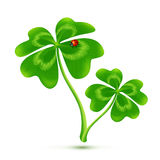 Couple of cartoon style four-leaf clovers with ladybug, vector illustration Stock Photography