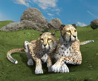 Couple of cheetahs Royalty Free Stock Photo