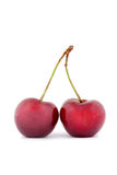 Couple of cherries Royalty Free Stock Image