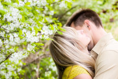 Couple in cherry tree flowers Stock Photos