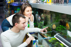 Couple choosing aquarium fish Stock Image
