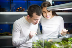 Couple choosing aquarium fish Royalty Free Stock Photos