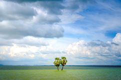 Couple Tree in the middle of the lake. Couple Coconut Tree in the middle of the lake Royalty Free Stock Photo