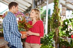 Couple buys together in gardening. Couple collects plants and flowers together in a nursery stock images
