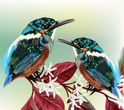Couple of colorful birds sit on a branch Royalty Free Stock Image