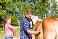 Couple combing horse on pony farm Stock Images