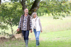 Couple in countryside looking for mushrooms Stock Photos