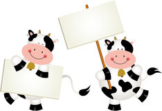 Couple cows with signboards Stock Image