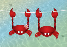 Couple of crab hanging on the sea. Illustration of Couple of crab hanging on the sea Stock Photo