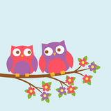 Couple of cute owls on blooming branch Stock Photos