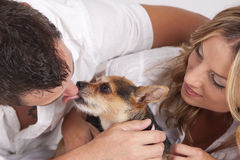 Couple with cute pet dog. Happy couple with cute pet dog licking nose of man Royalty Free Stock Images