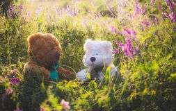 Couple of cute teddy bears in love on a sunny summer meadow royalty free stock images