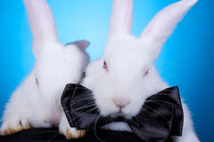 Couple cute white baby rabbits Stock Photo