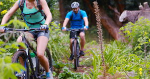 Couple cycling bicycle. In forest, 4k stock footage