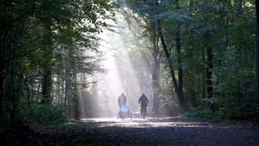 Couple cycling with child transporter through forest stock footage