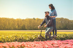 Couple cycling through tulip field Royalty Free Stock Images
