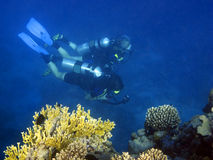 Couple of divers. A couple of scuba divers exploring the coral reef of Red Sea Stock Photo