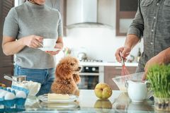 Couple with dog is making breakfast . stock photos