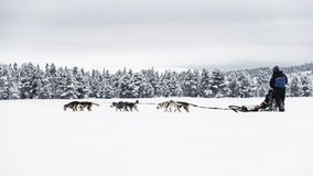Free Couple Dog Sledding Over A Frozen Lake Near To The Forest , High Contrast Royalty Free Stock Photos - 152420558