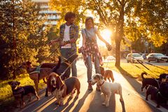 Couple dog walker with dogs enjoying in walk. Outdoors stock photo