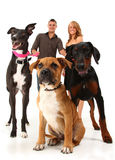 Couple with Dogs. Twenties couple with three dogs, greyhound, boxer, doberman.  Over white background Stock Photos