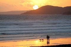 Couple and dogs with beach sunset. Couple walking dogs on the beach with a sunset on Newgale Beach Pembrokeshire Stock Photos