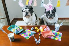 Couple of dogs celebrating Easter Stock Image