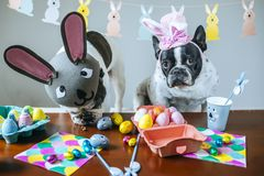 Couple of dogs celebrating Easter Royalty Free Stock Photography