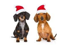Couple of dogs on christmas holidays stock photo