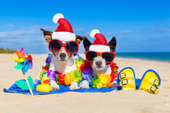 Couple of dogs on christmas summer vacation. Couple of two dog sitting close together wearing santa claus hat at  beach on summer christmas vacation holidays, on Stock Image