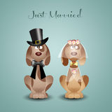 A couple of dogs just married Stock Image