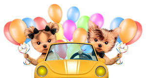 Couple of dogs ssitting in cabriolet with balloons Royalty Free Stock Photography