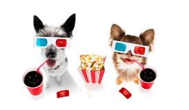Couple of dogs to the movies royalty free stock photography