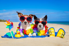 Couple of dogs on vacation Royalty Free Stock Images