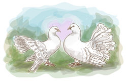 Couple doves. Royalty Free Stock Photo