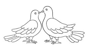 Couple of doves kissing - countour vector illustration Stock Photo