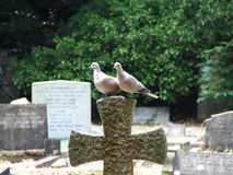 Couple of doves sitting on stone cross in cemetery Royalty Free Stock Images