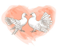 Couple doves with symbol of love - red heart. Royalty Free Stock Images