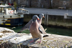 Couple of doves on a wharf of Seine river, Paris Royalty Free Stock Photos