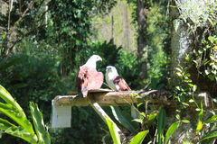 Couple eagle royalty free stock photo