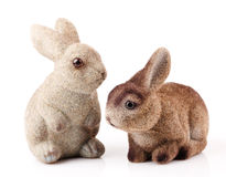 Couple of easter bunnies Stock Photos