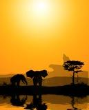 A couple of elephants Stock Photo