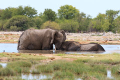 Couple of elephants Stock Photo