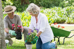 Couple engaged in gardening Stock Images