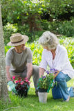 Couple engaged in gardening Royalty Free Stock Photos
