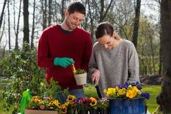 Couple enjoying garden work. Young happy couple enjoying garden work, horizontal royalty free stock images