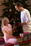 Couple Exchanging Presents In Front Of Tree Stock Images