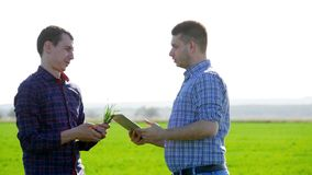 Couple of farmers in field using digital tablet. Two farmer standing in a field and looking at tablet. They are stock video footage