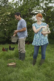 Couple Feeding Hens On Grassland Royalty Free Stock Photo