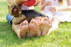Couple feets lying in line at green grass and dog Royalty Free Stock Images